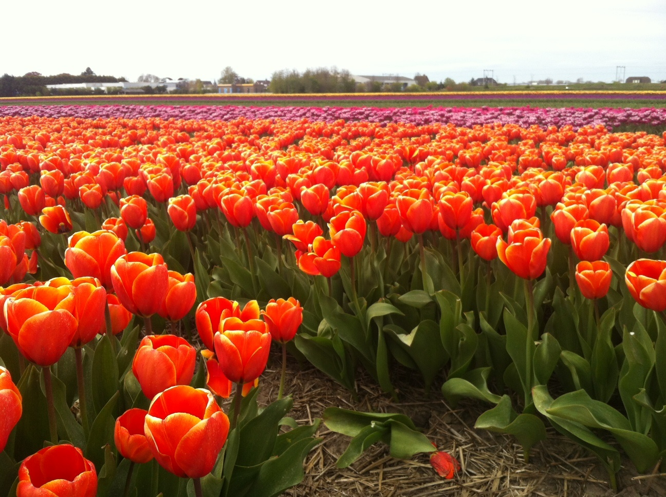 Keukenhof gardens 2020 when to visit