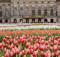 National Tulip Day, tijdvoortulpen