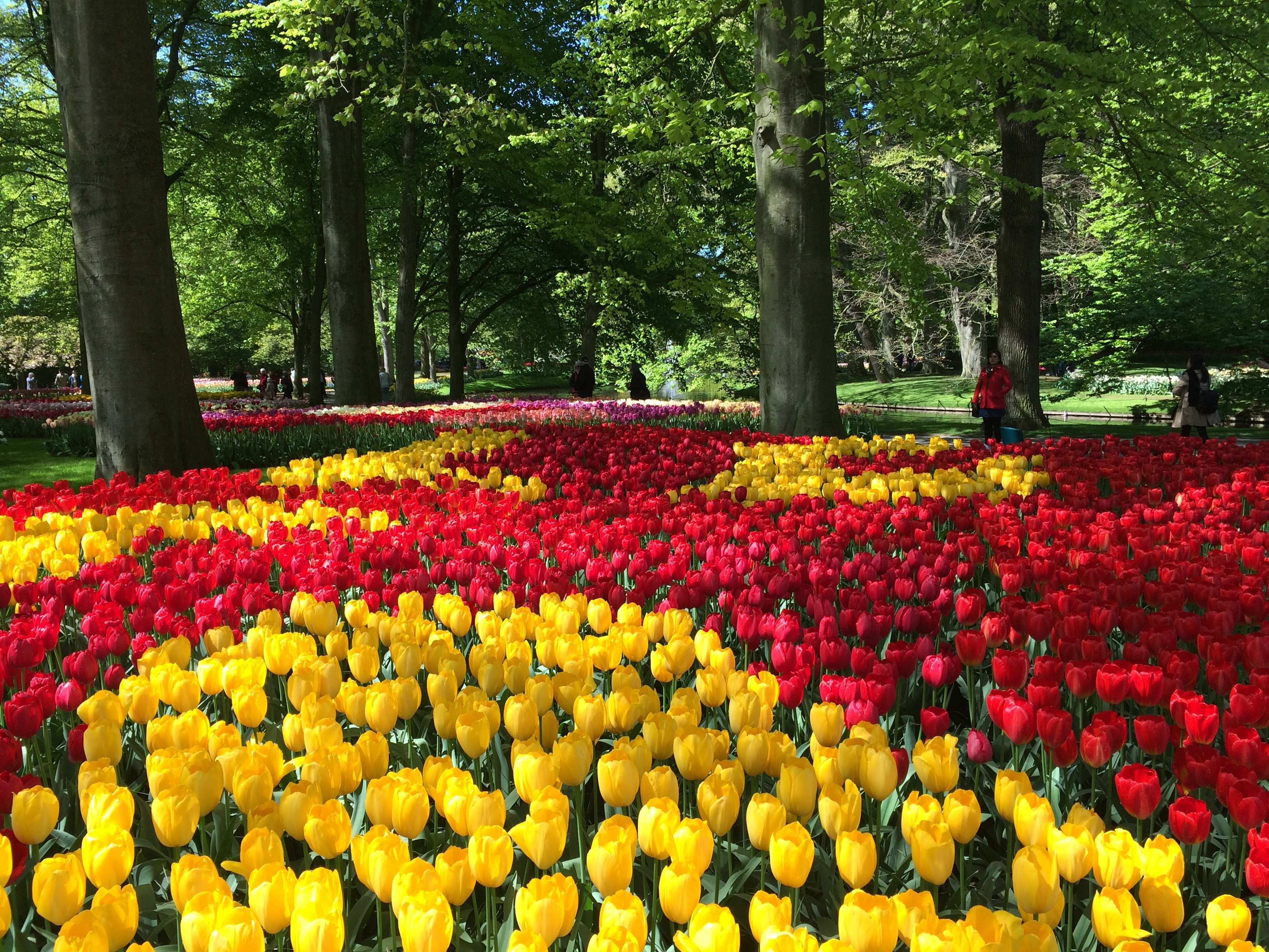 Keukenhof 2018 dates, theme, tickets, opening times