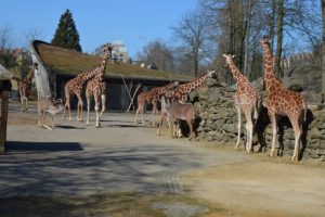 Thing to do in Amsterdam with kids. Artis Royal Zoo
